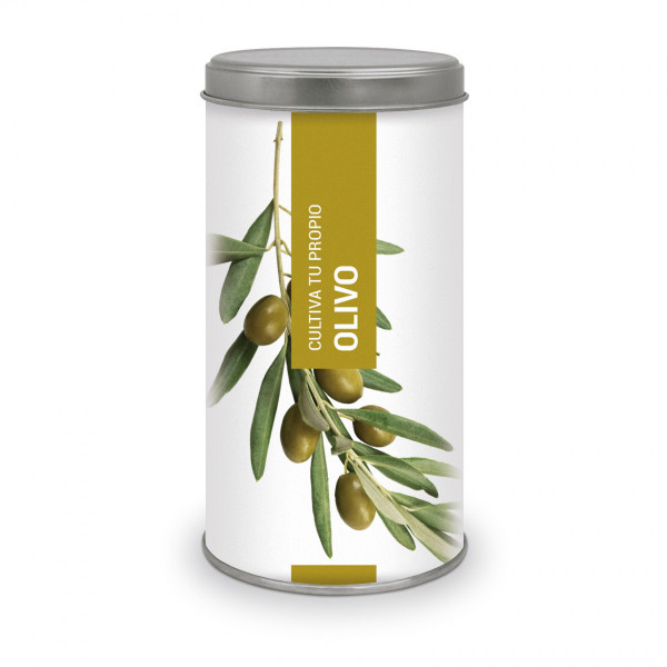 """Olive"" Bonsai Tree Grow Kit"